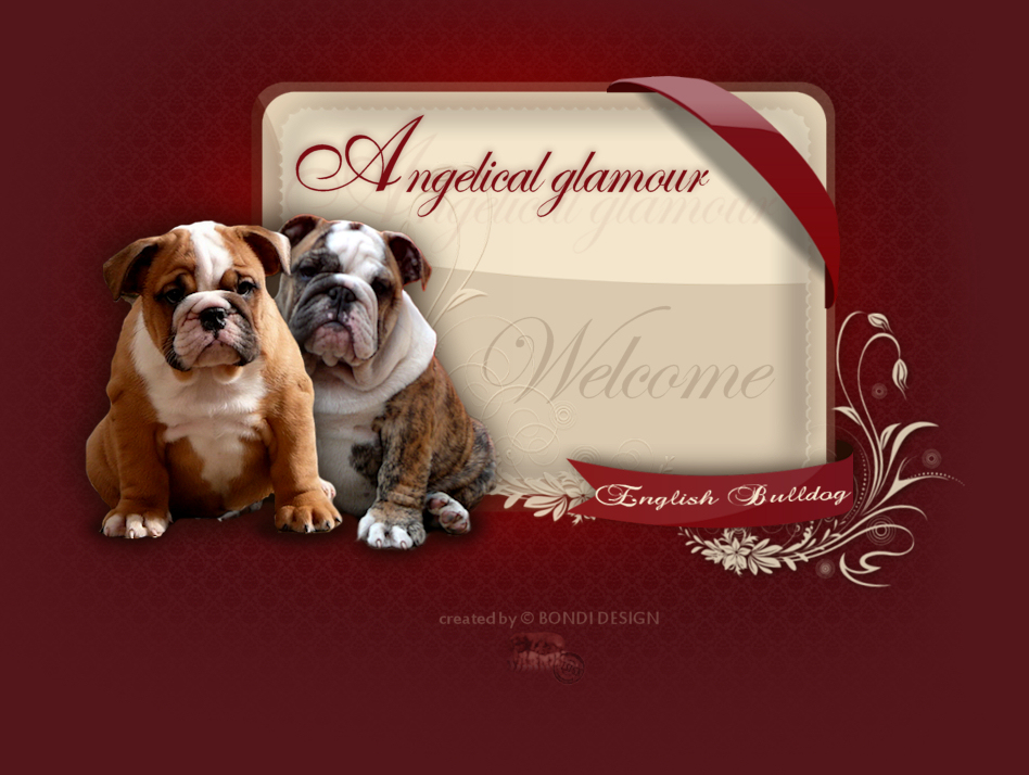Welcome to Angelical glamour kennel